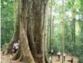 Vietnam National Parks