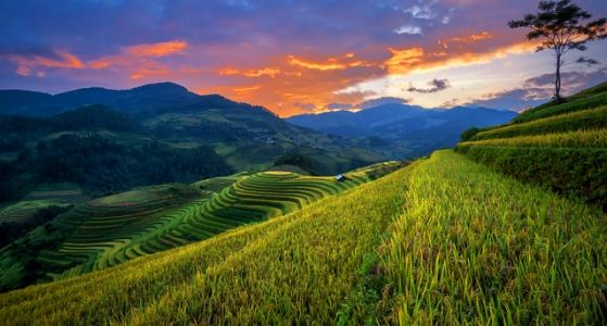 Northwest of Vietnam Tours