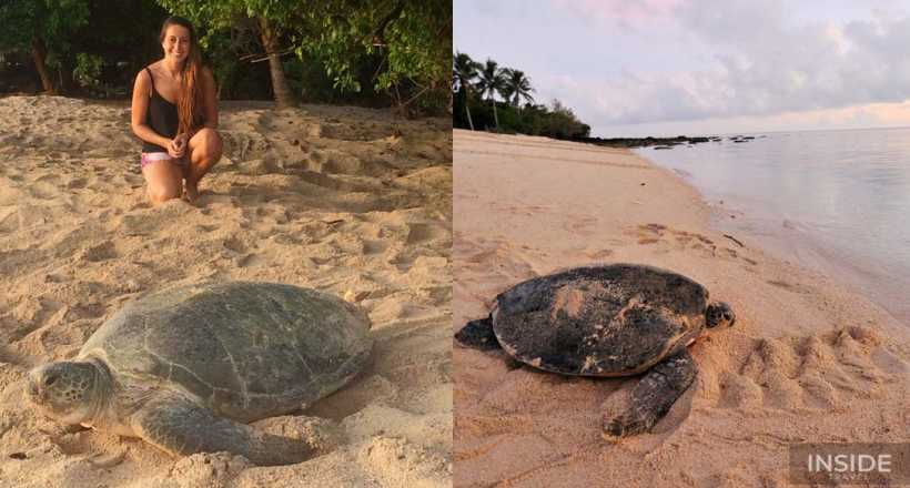 Explore Turtle Island & Sandakan Wildlife