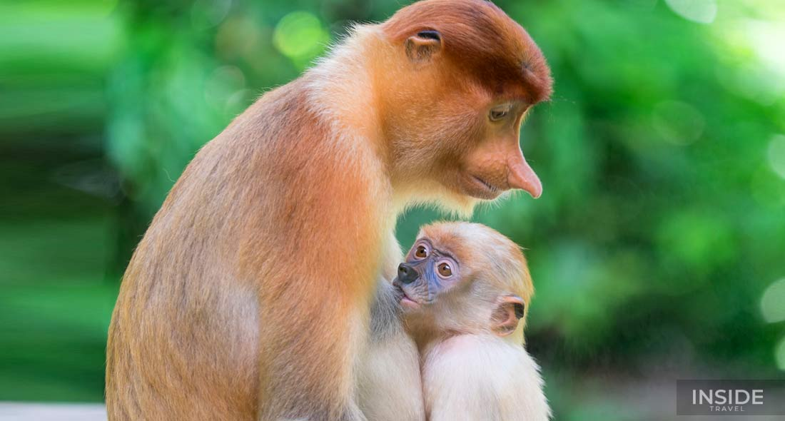 Orangutan Tanjung Putting Journey