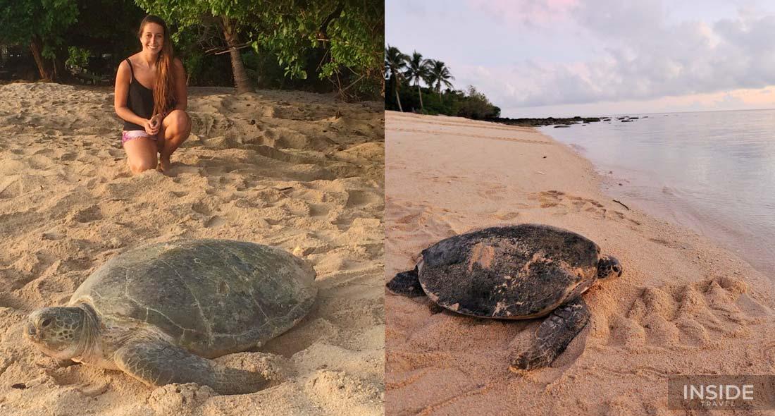 Explore Turtle Island & Sandakan Wildlife