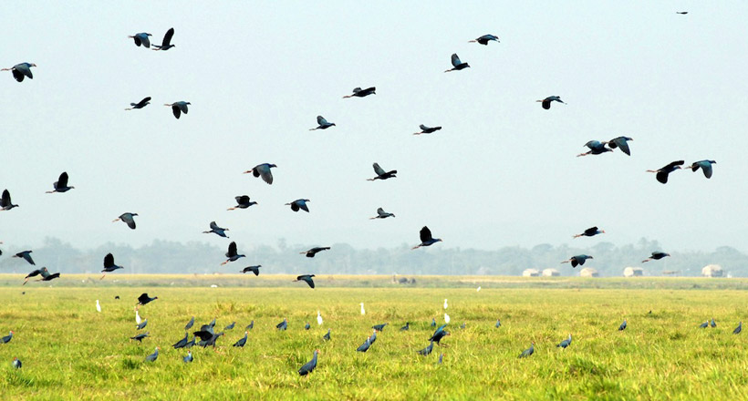 Bird-watching tour in Moe Yun Gyi Wetland